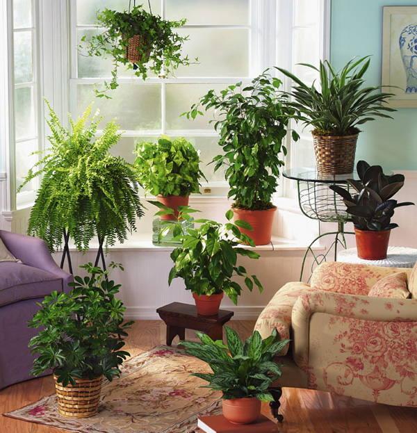 Цветы в доме: приметы и суеверия