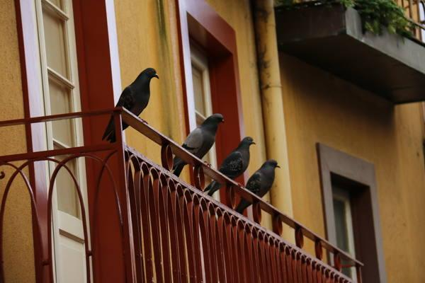 голуби сидят на балконе