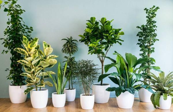 Растения, привлекающие здоровье