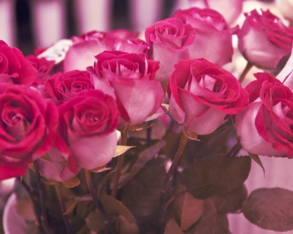 розовые розы значение