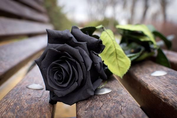 подарок черная роза