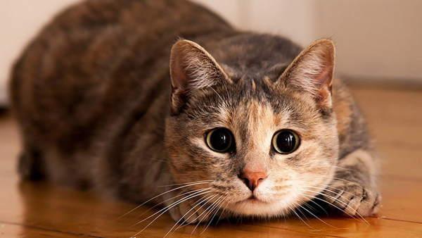 приметы связанные с кошками в доме