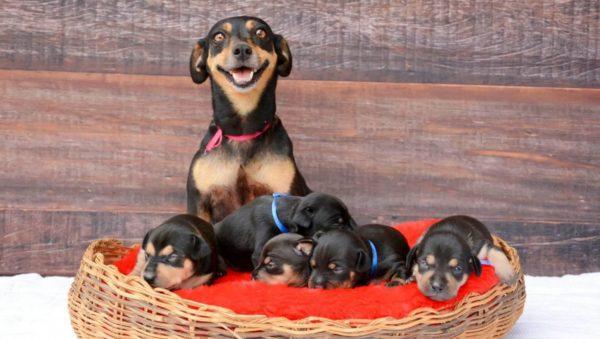 Сонник: собака родила щенков