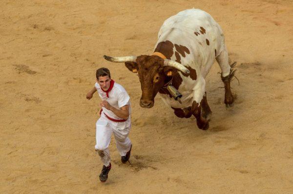 К чему снится убегать от быка
