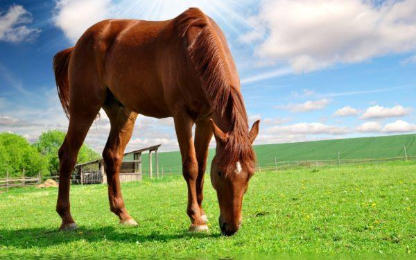 приснилась лошадь