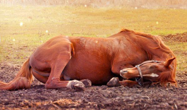 к чему снится мертвая лошадь