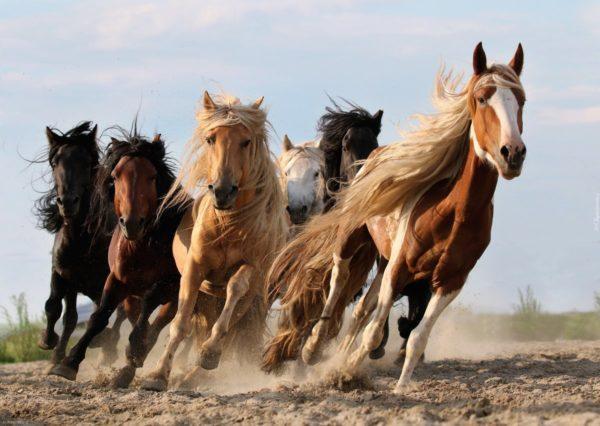 к чему снится лошадь во сне для женщины