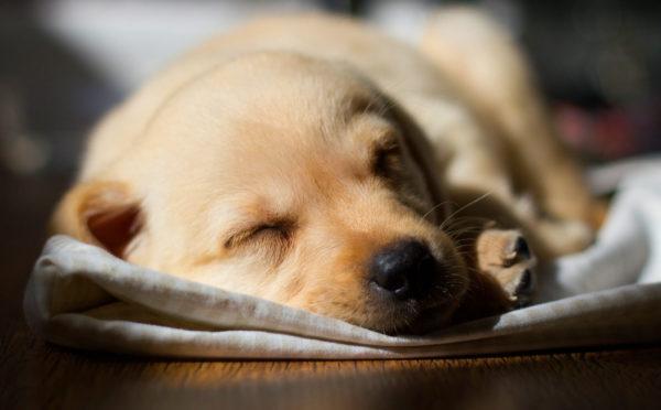 К чему женщинам и мужчинам снится умершая собака