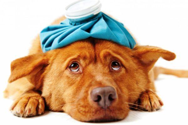 К чему приснилась больная собака