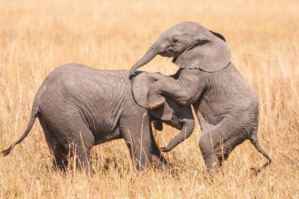 Слоненок во сне
