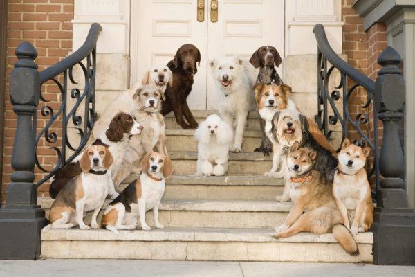 Много животных в доме
