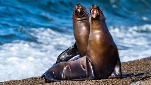 Дикие морские животные во сне