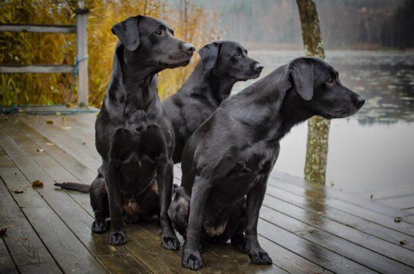 Увидеть много собак