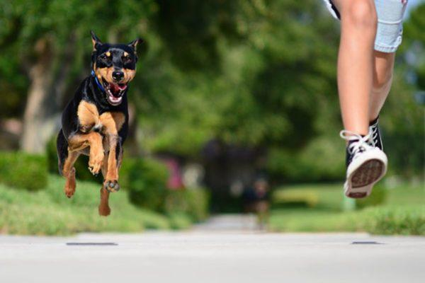 К чему снится убегать от собаки