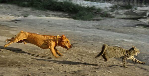 Собака напала на кошку
