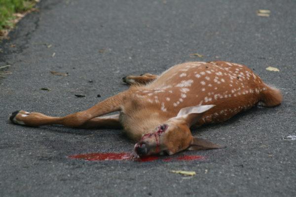 К чему снятся умершие животные