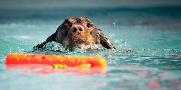 Утонувшая собачка