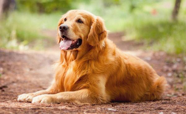Приснилась добрая собака