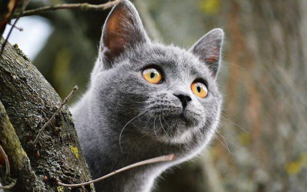 К чему снится большой или маленький серый кот