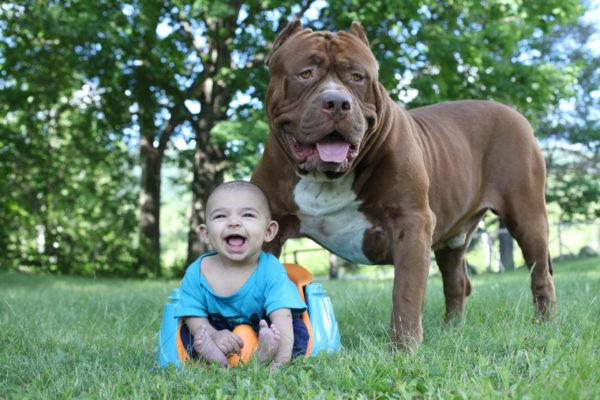 Видеть пса-защитника