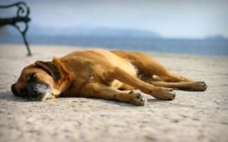 К чему снится убийство собаки – сонник