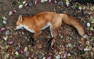К чему снится умершее домашнее животное