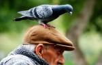 Что обещают приметы, когда птица накакала на голову, плечо или одежду?