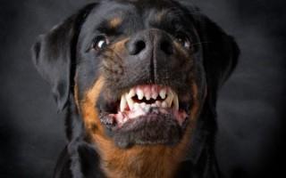 Приснилась злая и агрессивная собака – сонник