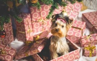 К чему снится, что подарили собаку