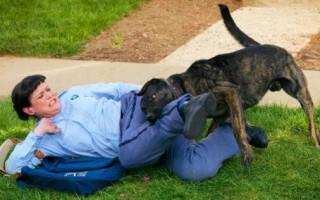 Сонник – злая собака которая нападает