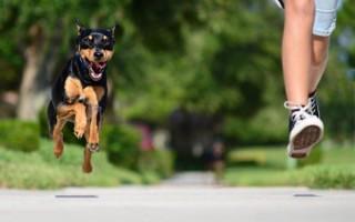 К чему снится убегать от своей или чужой собаки