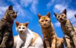 К чему приснилось много кошек