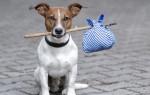К чему снится потерять собаку: толкование для женщин и мужчин
