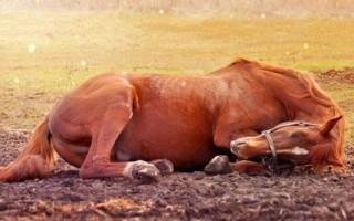К чему приснилась мертвая лошадь