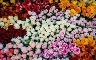 Что означают розы в зависимости от цвета бутонов