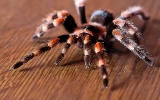 К чему появляется паук в доме?