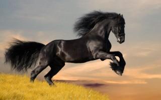 К чему приснился черный конь – толкование известных сонников