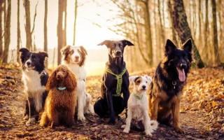 Приснилось много разных собак: сонник для женщин и мужчин