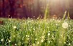 Приметы о погоде на основе наблюдений за растениями и животными