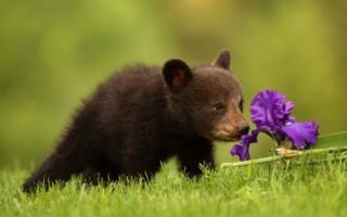 К чему снится маленький медвежонок