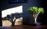 Как правильно посадить денежное дерево чтоб велись деньги?