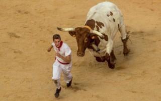 К чему приснилось убегать от быка – толкование известных сонников