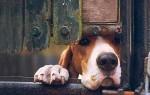 К дому прибилась собака: толкование примет