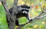 Видеть во сне животных – к чему это приснилось