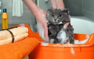 К чему приснилось мыть кошку