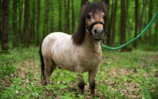 К чему снятся пони – толкование различных сонников