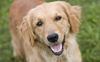 К чему снится ласковая и добрая собака
