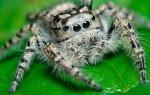 Можно ли убивать пауков в доме?