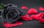 Черные розы: что означают?