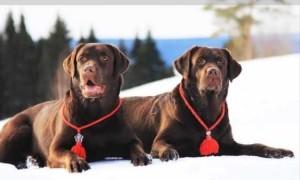 Как сделать оберег для собаки своими руками